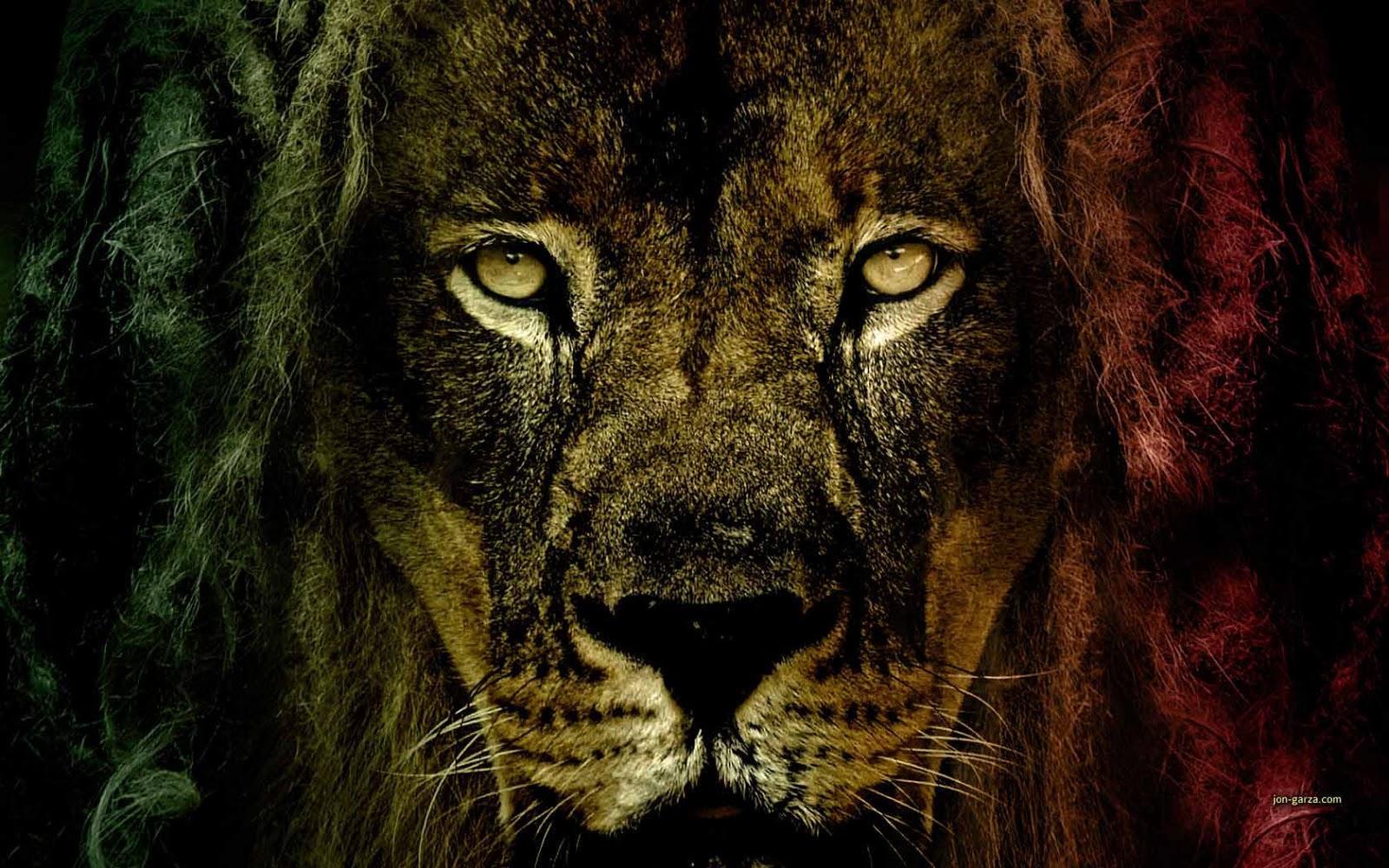 Lion Wallpaper 5