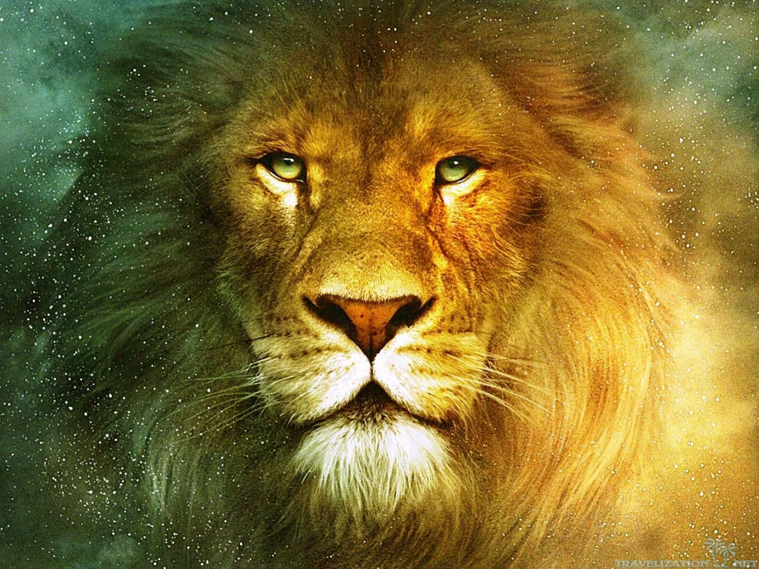 Lion Wallpaper 9