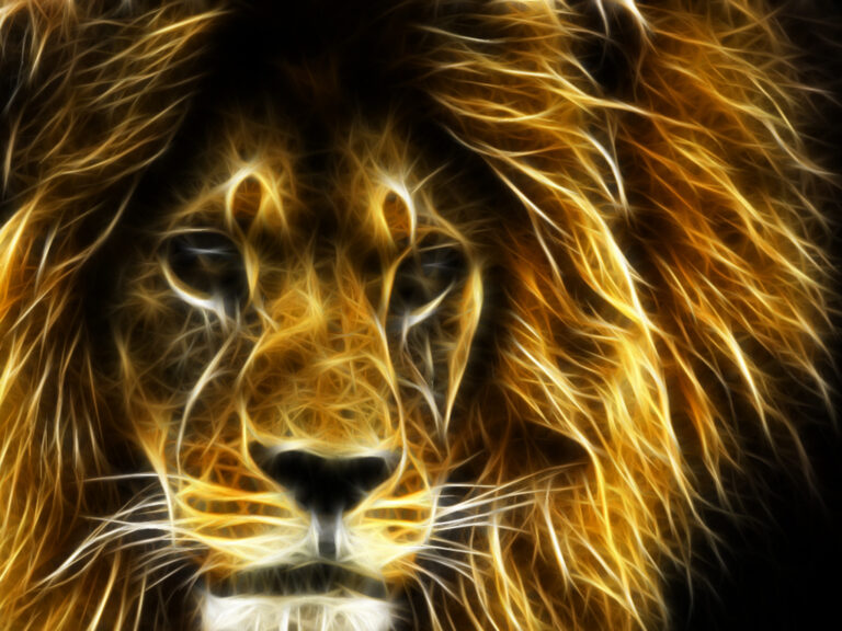 Lion Wallpaper 8