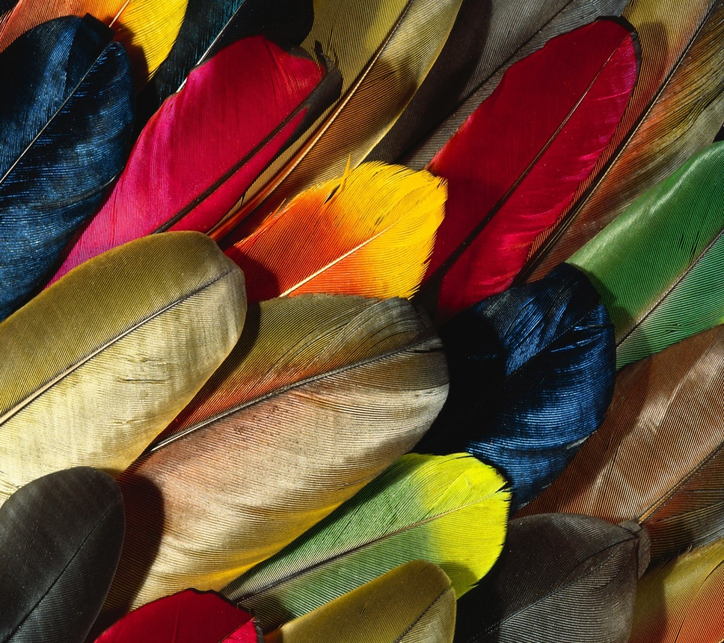 feathers of colors wallpaper 10179630