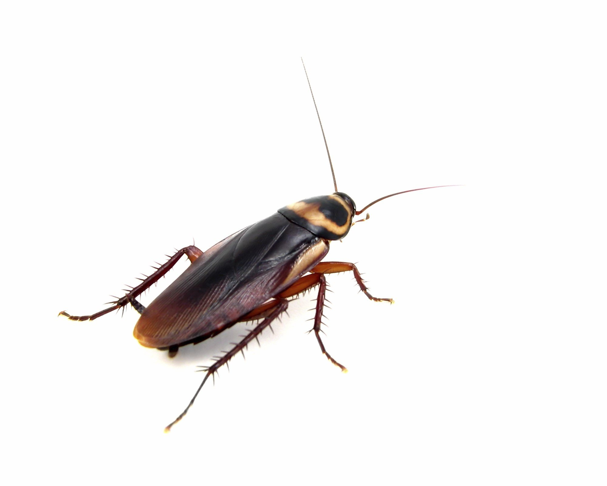Cockroach Computer Wallpapers