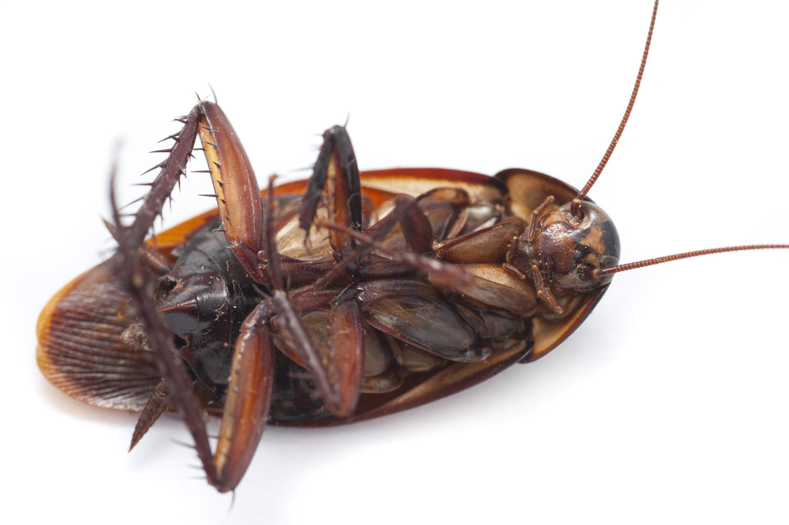 Cockroach images