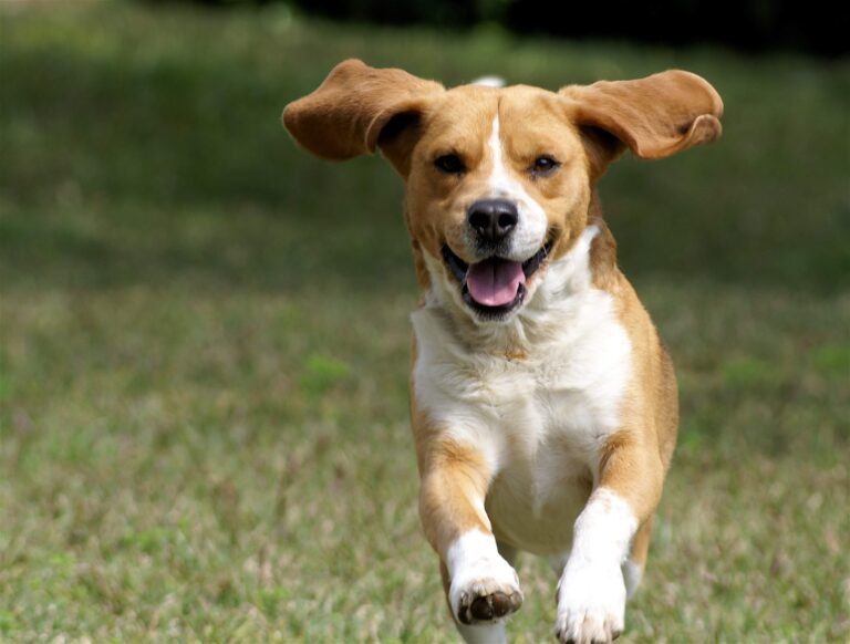 Dog HD