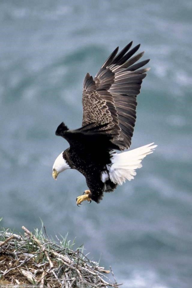 Eagle 8