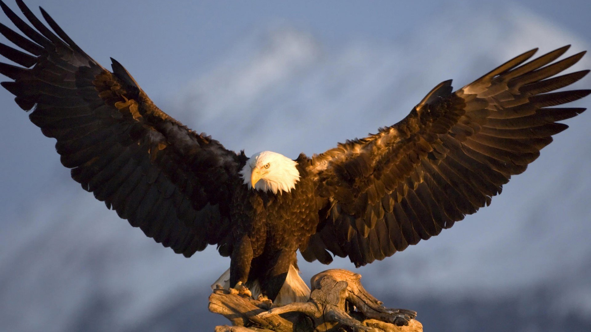 Eagle Background image