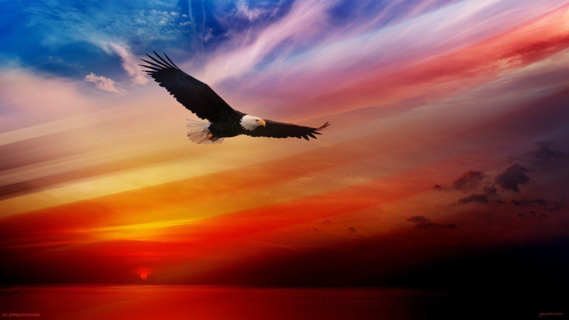 Eagle Desktop