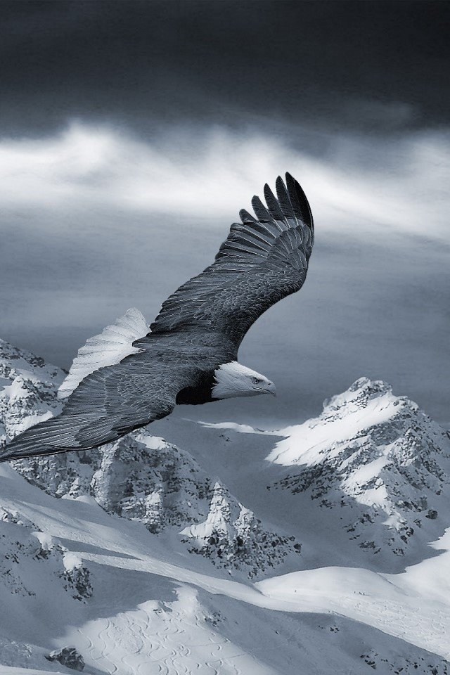 Eagle Wallpapers for mobile