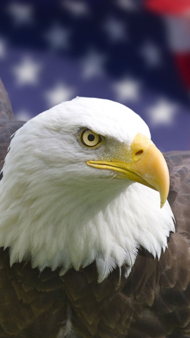 Eagle iphone Wallpapers