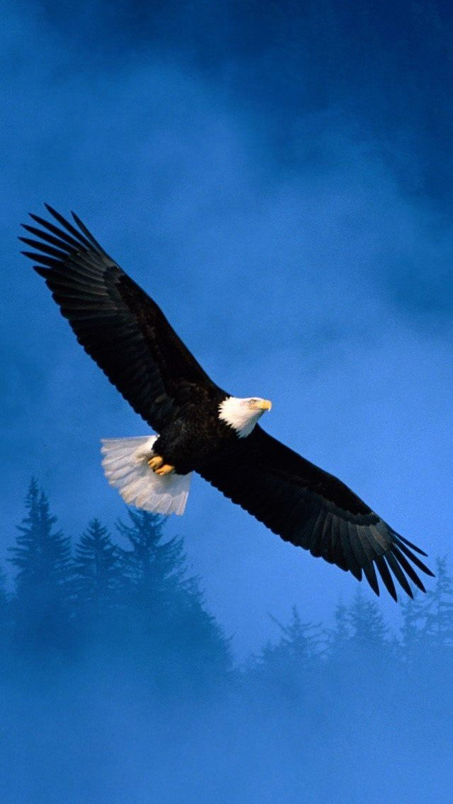Eagle mobile Wallpapers