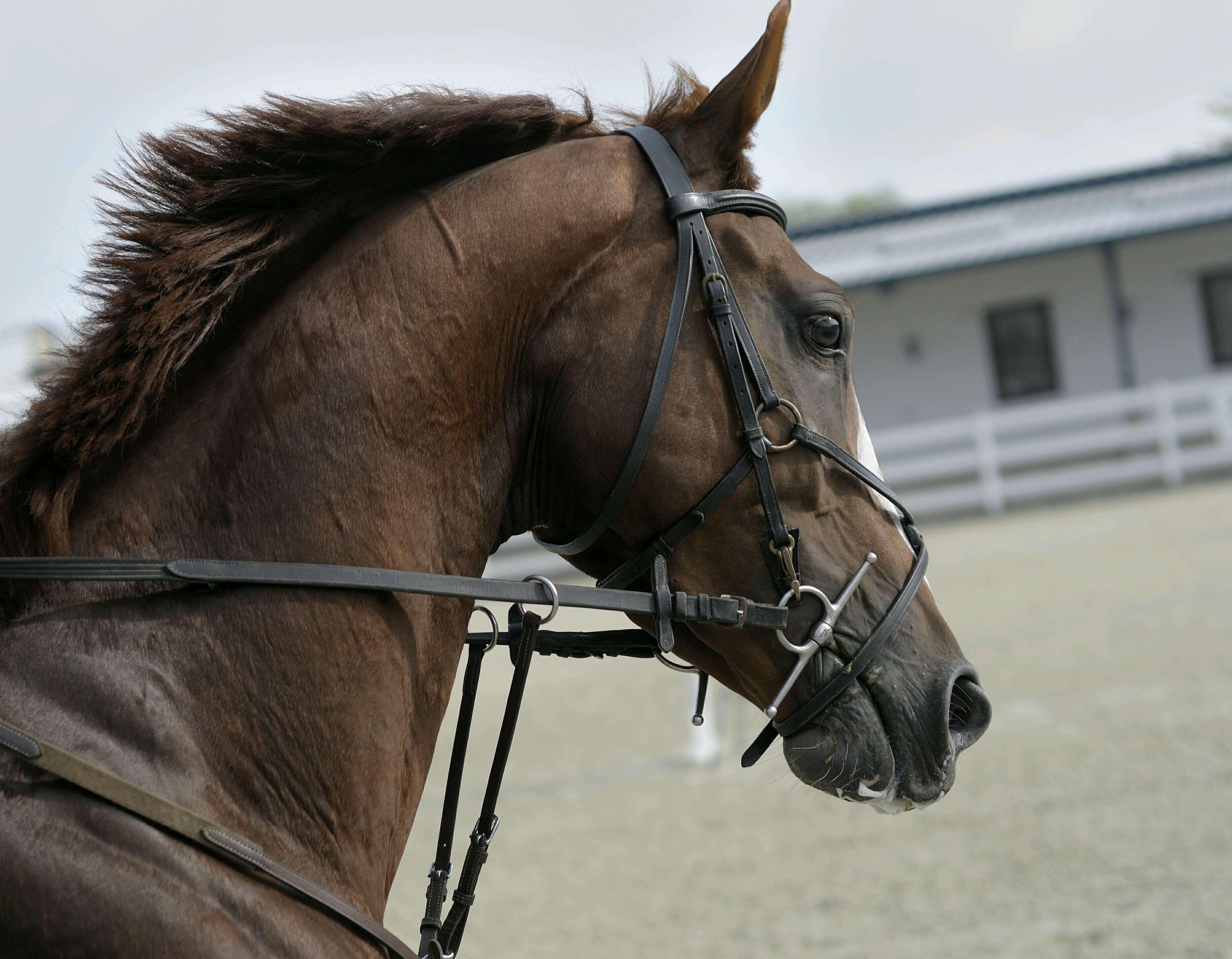 Horse High Quality