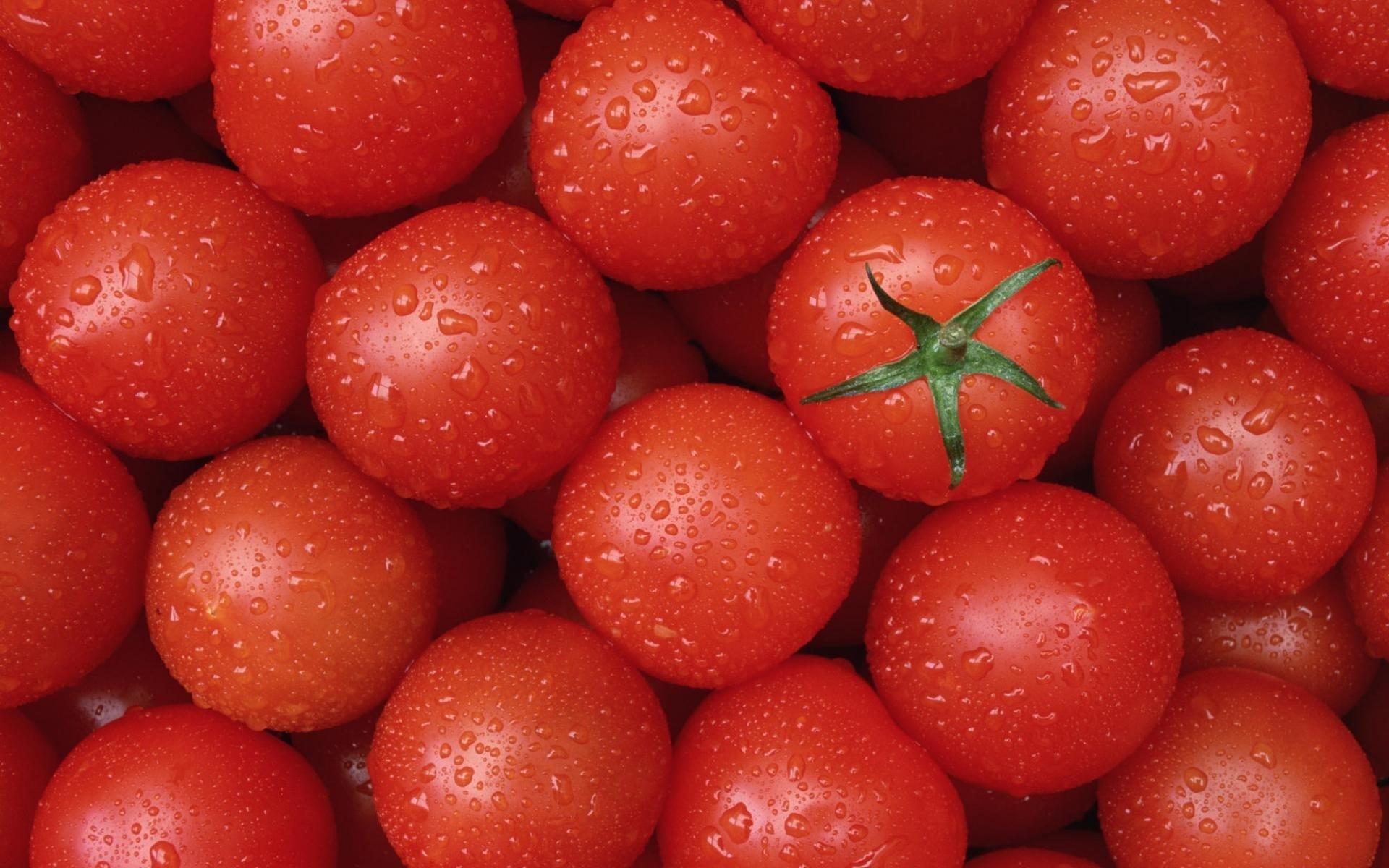 Tomato 14