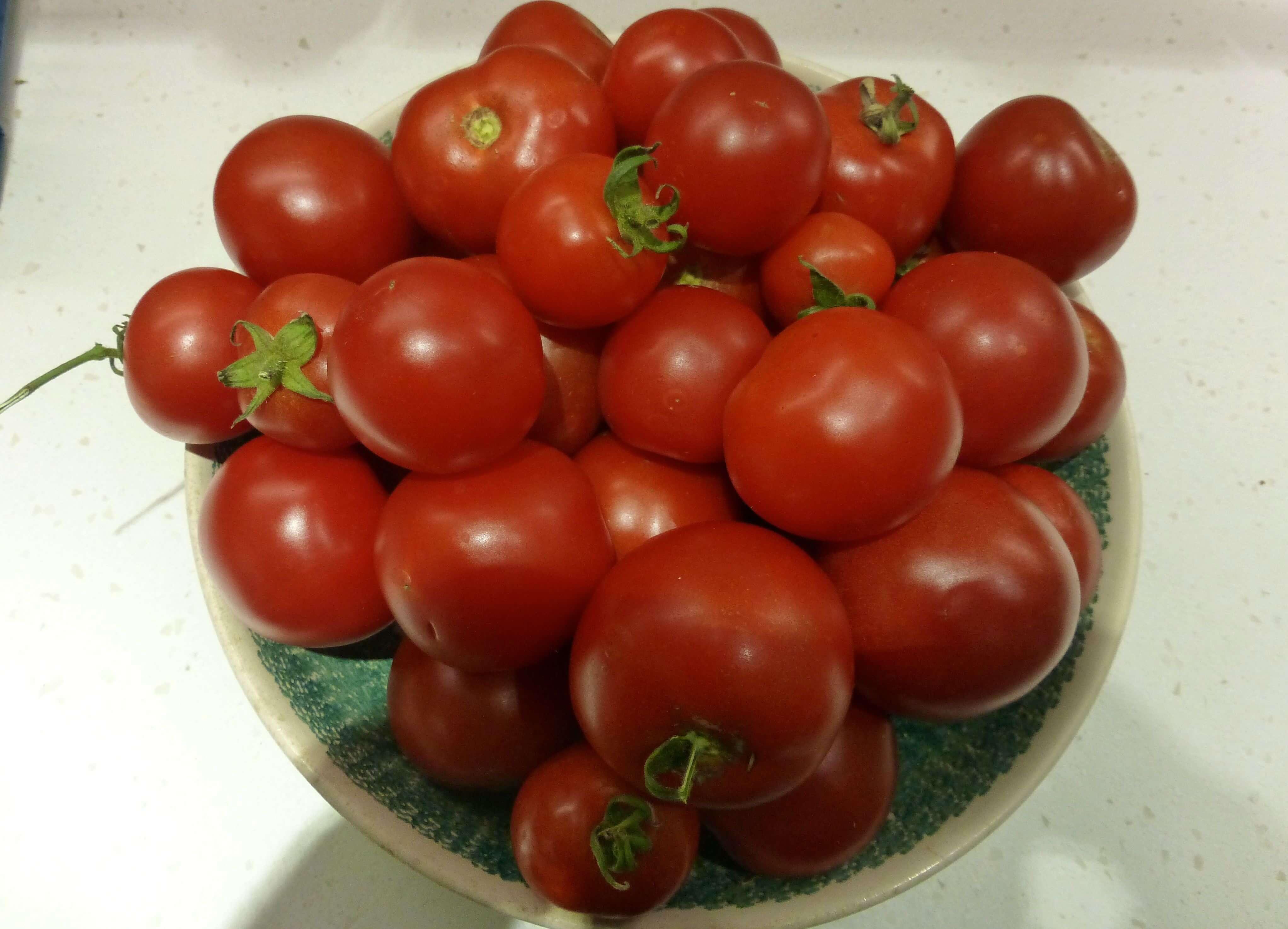 Tomato 16