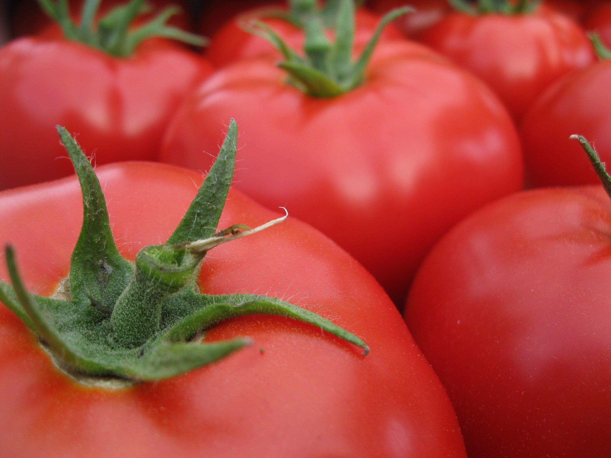 Tomato 4