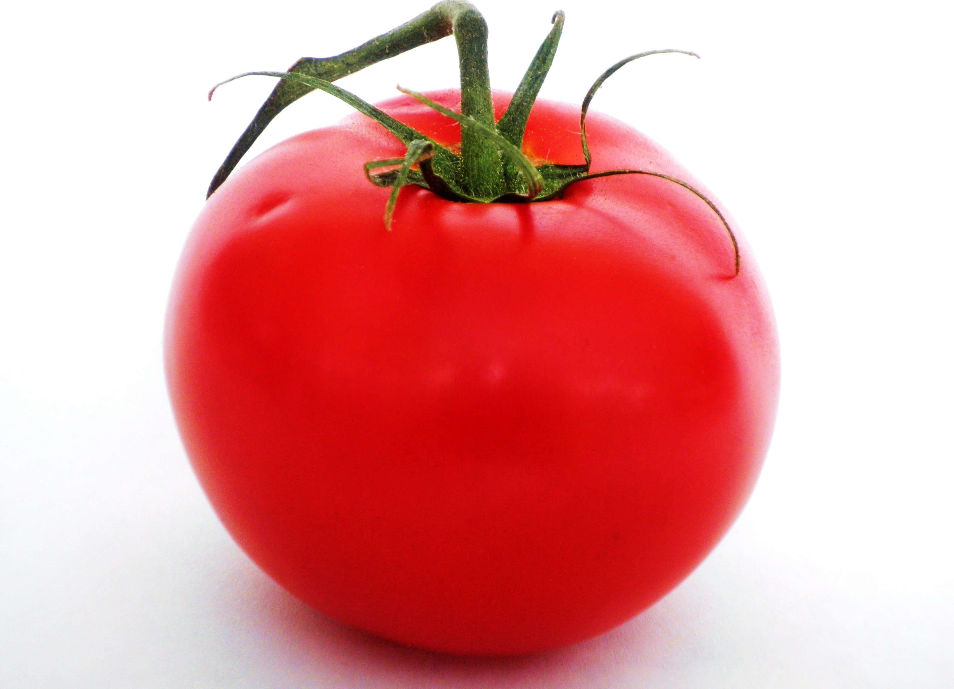 Tomato 9