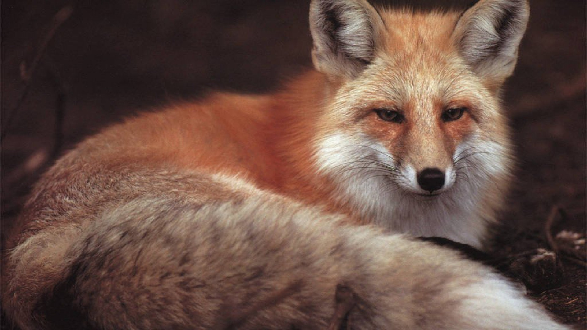 Fox Desktop