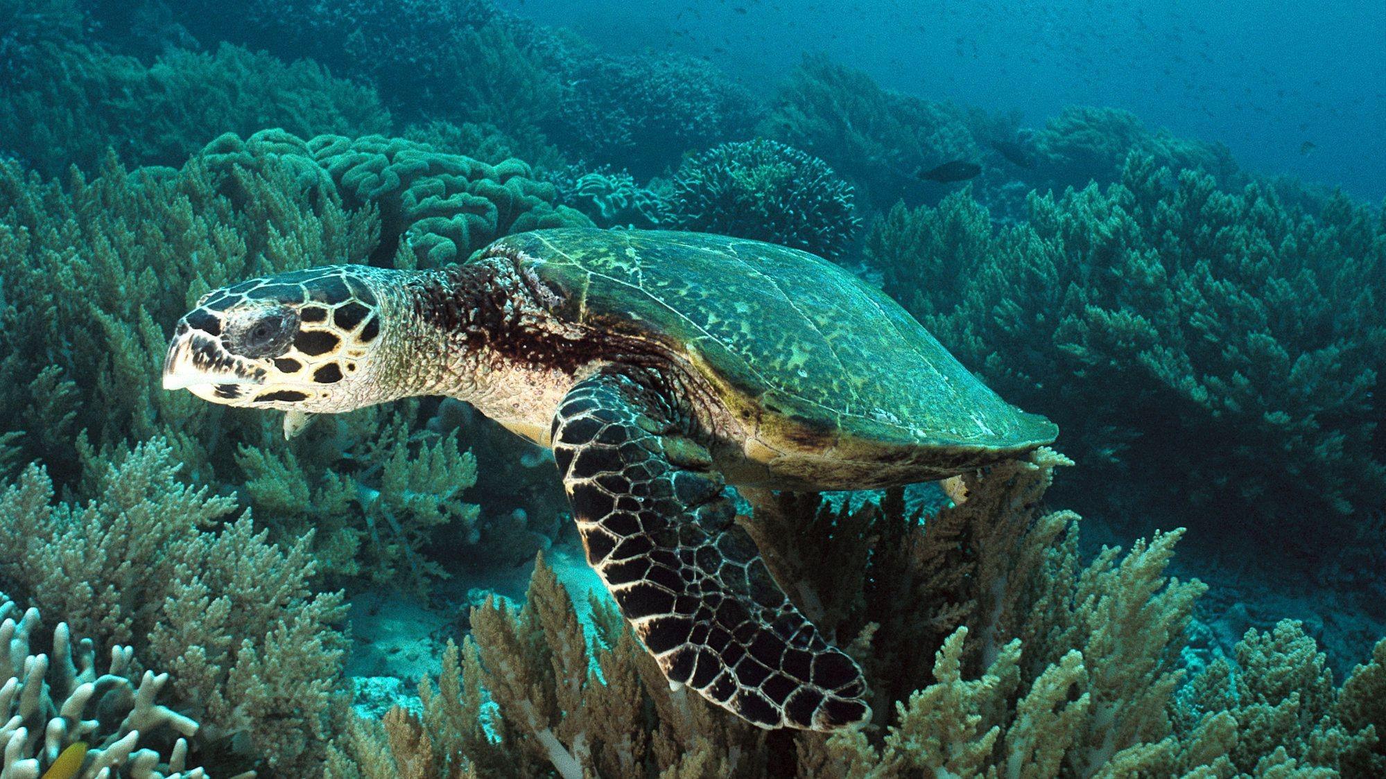 Sea Turtle Background image