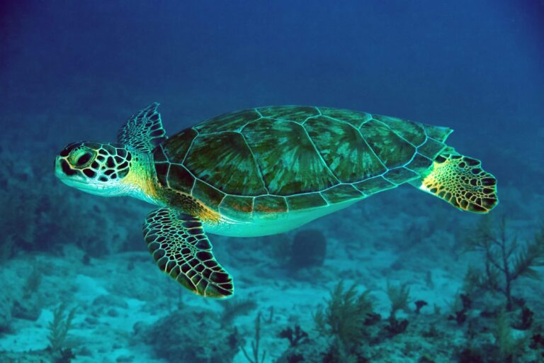 Sea Turtle Computer Wallpapers