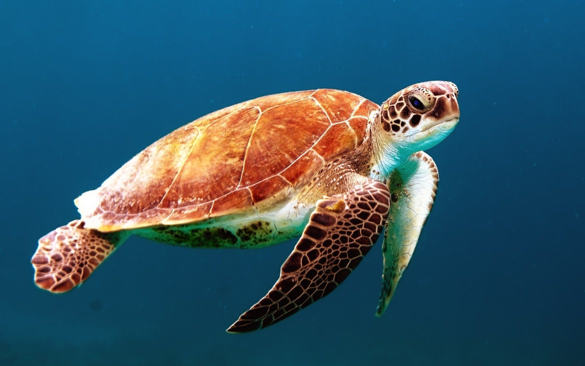 Sea Turtle Photos