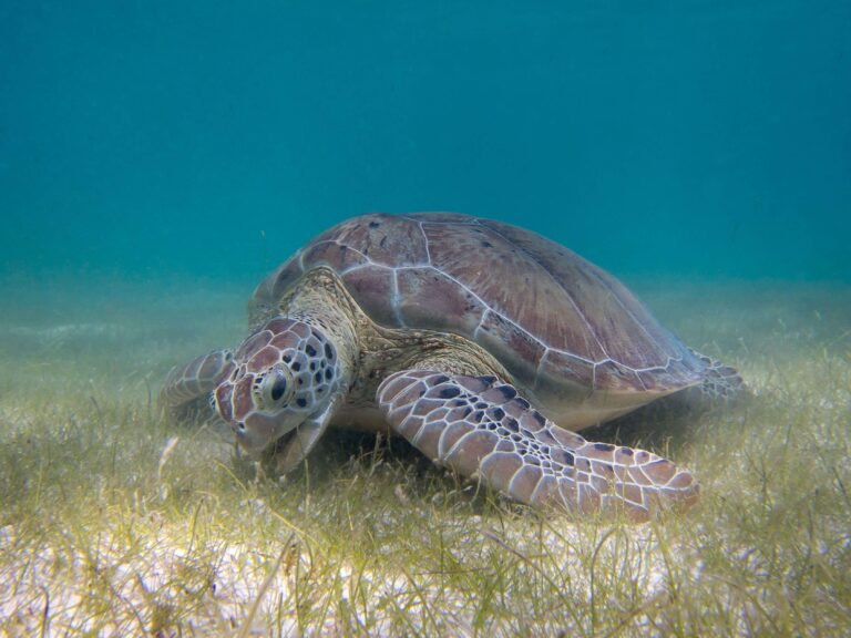 Sea Turtle Wallpapers 3