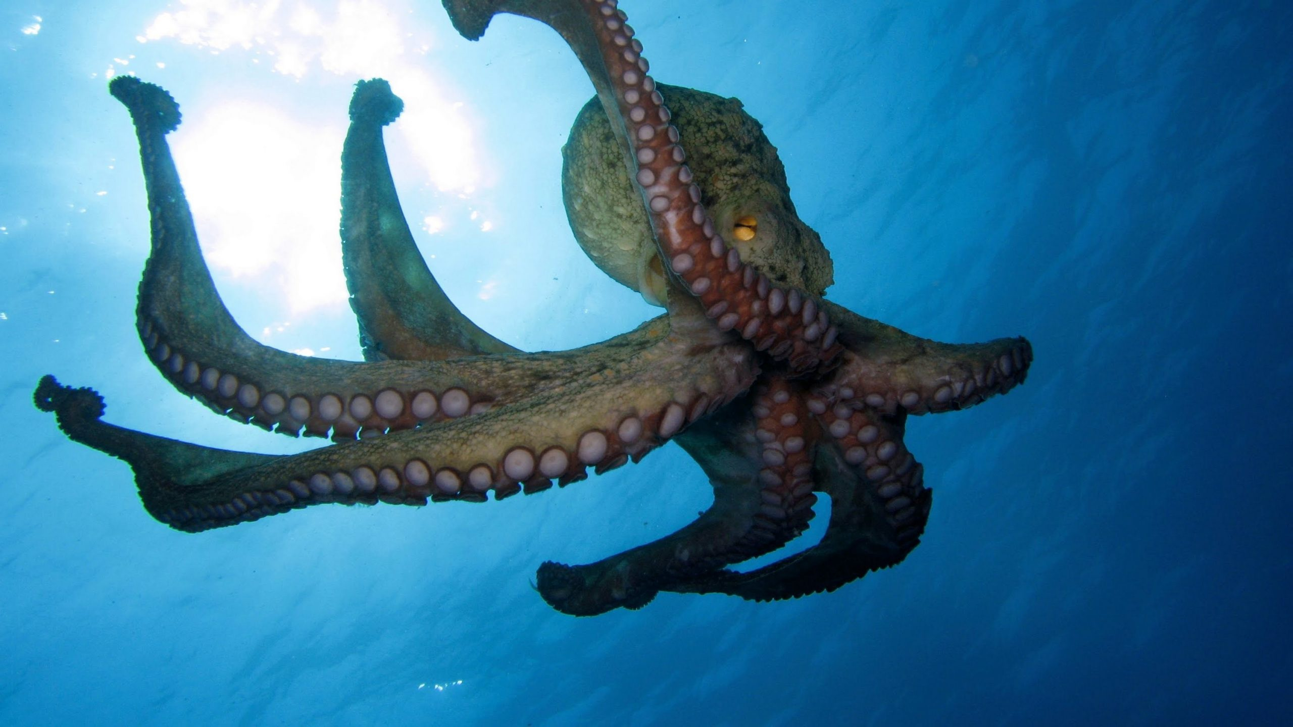 Octopus 02 scaled