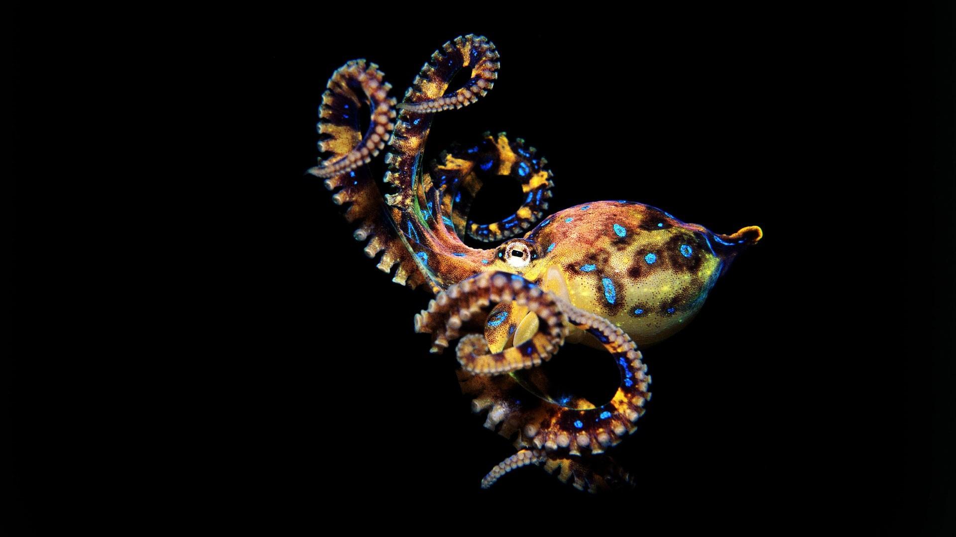 Octopus 07