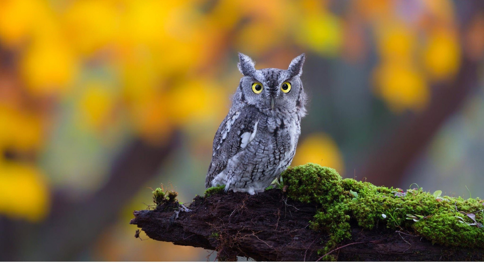 Owl Background images