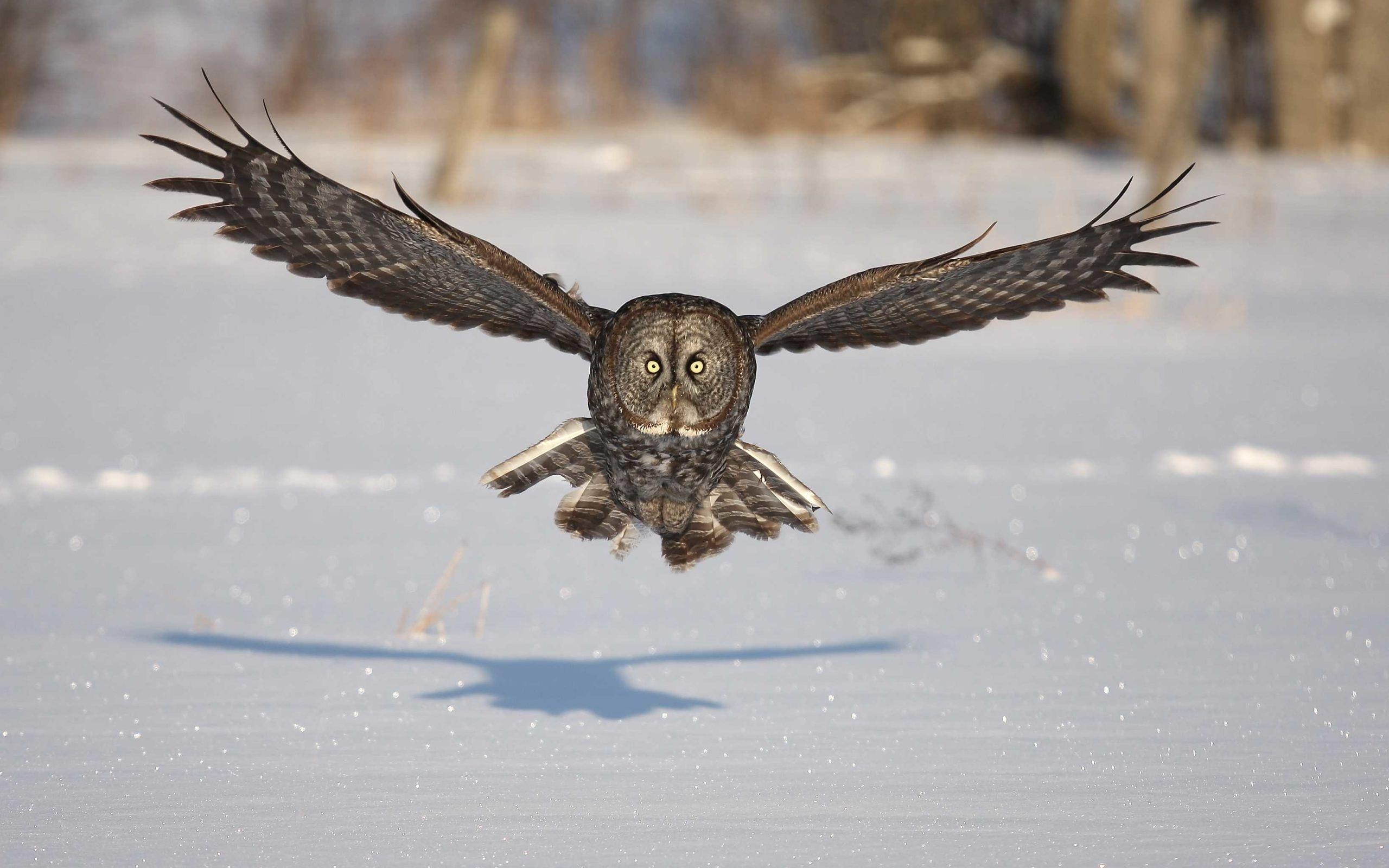 Owl Windows Wallpapers