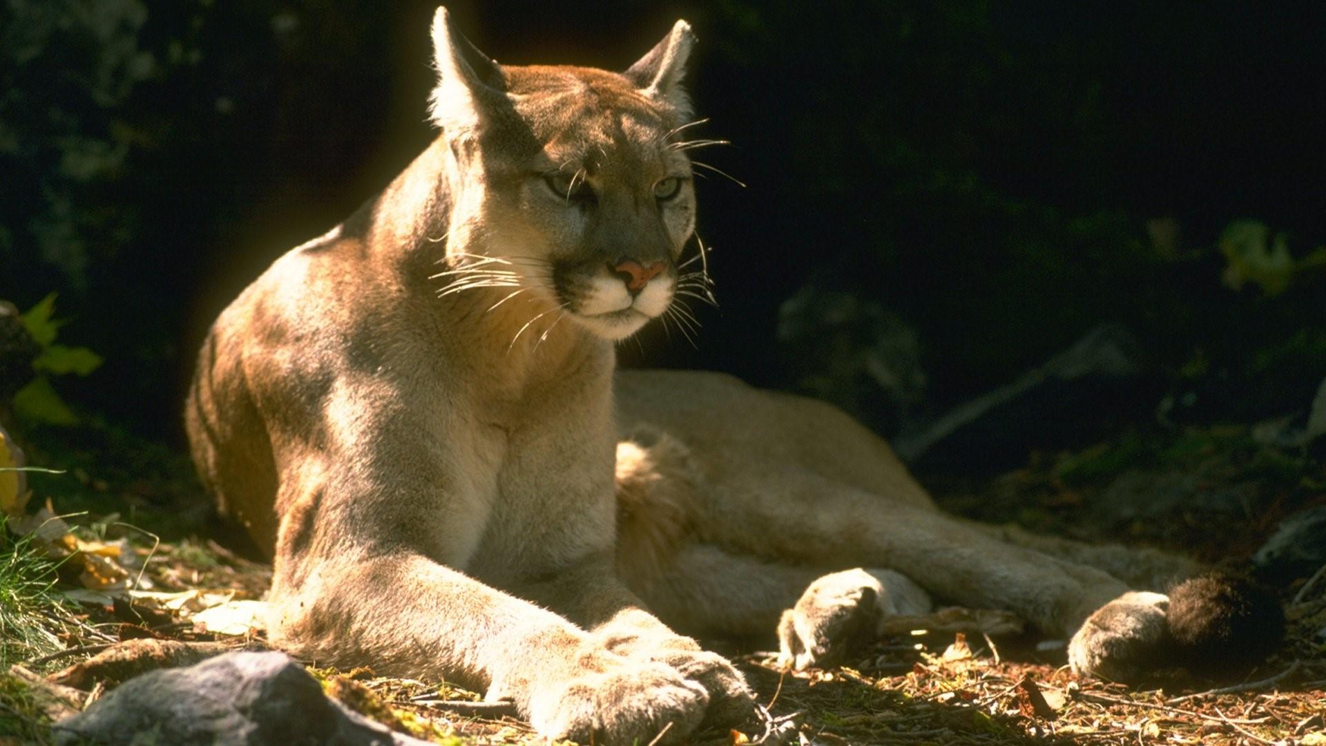 Mountain Lion HD