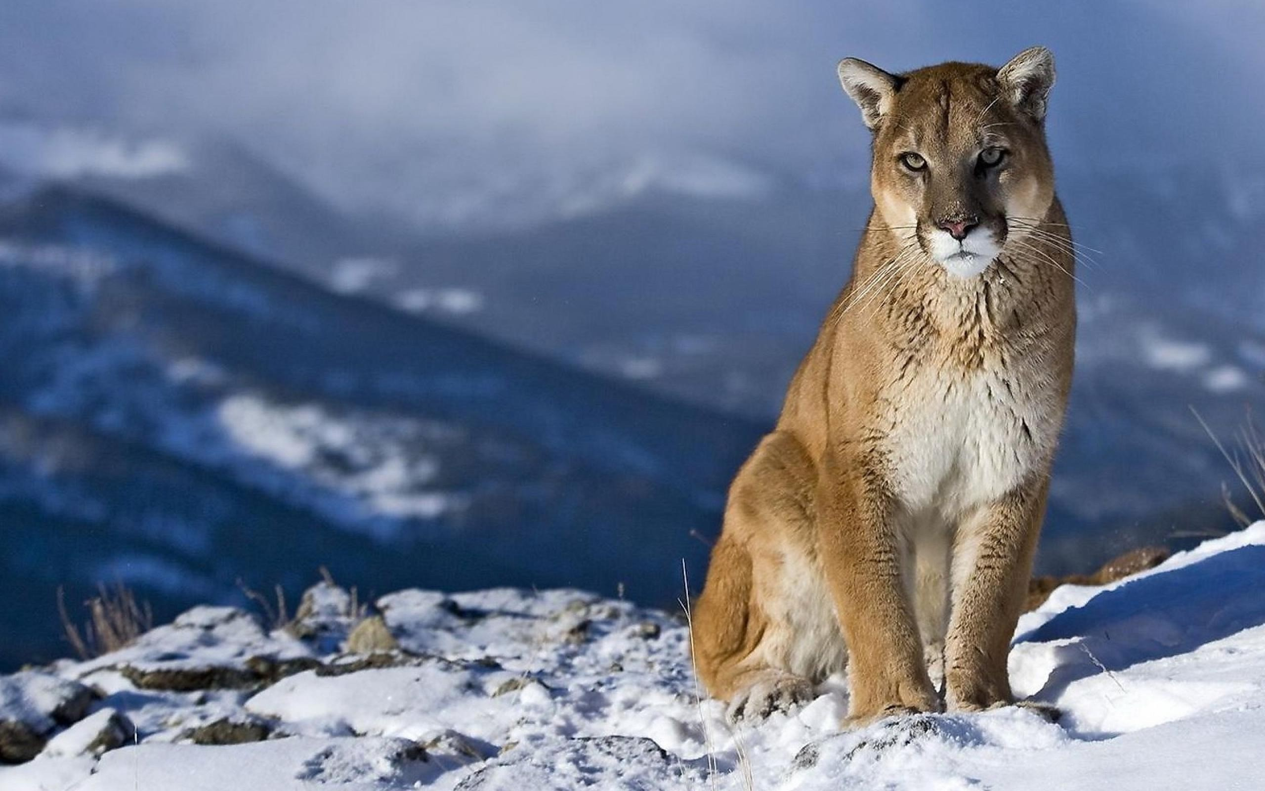 Mountain Lion HQ