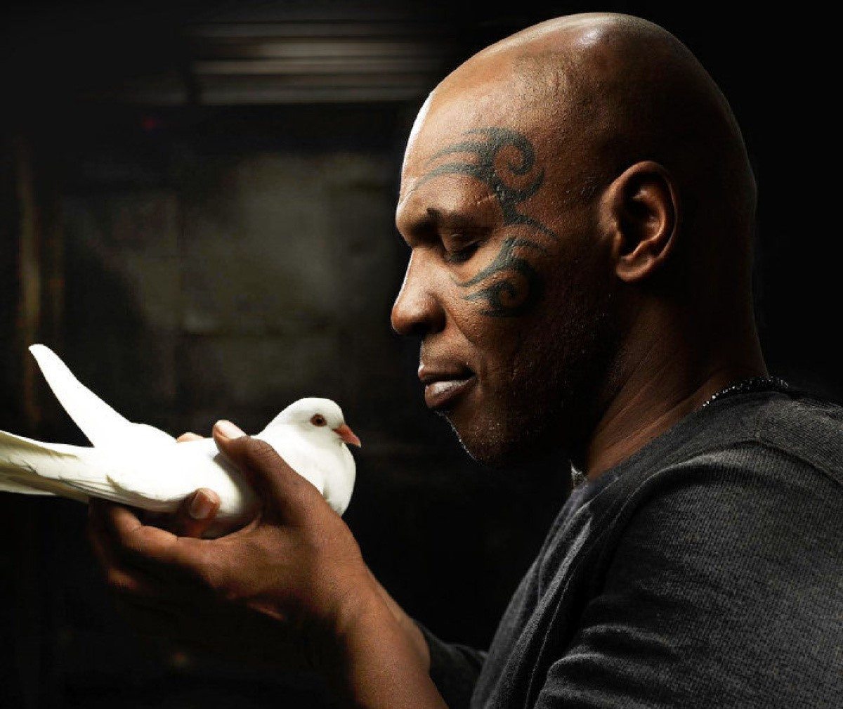 Mike Tyson Computer Wallpapers